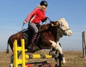 «Не купили скакового коня - приручили корову!» - подумала 15-річна німкеня регина майер.сказано - зроблено! фото