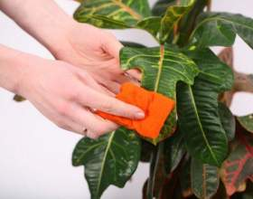 Кілька порад з лікування кімнатних рослин фото