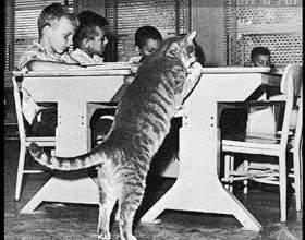 Неймовірна історія про кота по кличці классвосемь фото