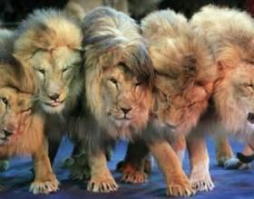 Нідерланди заборонили цирк з тваринами фото
