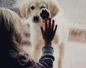 Обов`язково прочитайте і задумайтеся 10 життєвих уроків від вашої собаки фото