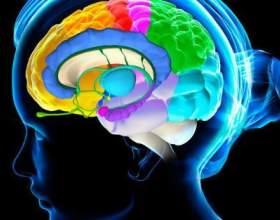 Очищаємо судини головного мозку натуральними засобами фото