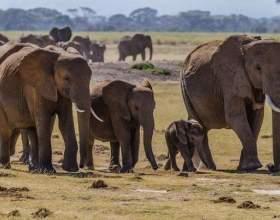 Виявляється у слонів є ритуал поховання !!! фото