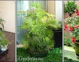 Помилки догляду за кімнатними рослинами фото
