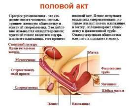 Основні компоненти статевого акту фото
