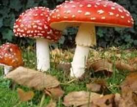 Перша допомога при отруєнні грибами фото