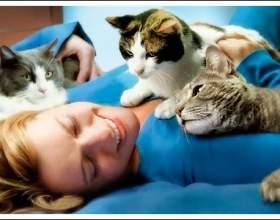 Чому кішка лягає на хворе місце людини фото