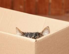 Чому кішки так люблять коробки? Відповідь знайдений! фото