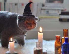 Чому в середньовіччі люди винищували кішок? фото