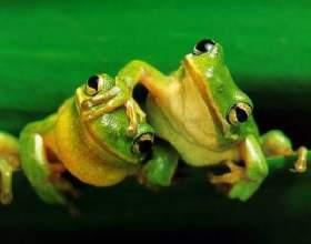 Принцип жаби фото