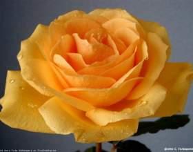 Притча про квітку життя і безсмертному садівника фото