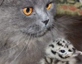 Про котів, які виростили чайку фото