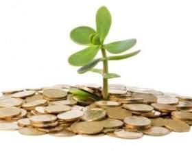 Розкриваємо секрет: як домогтися цвітіння грошового дерева фото