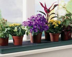 Рослини-пилососи фото