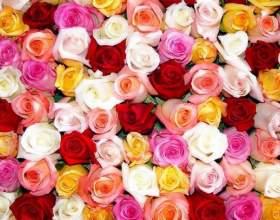 Різнокольорові троянди фото