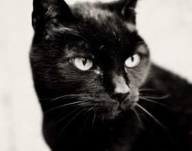 Найбезглуздіші закони про кішок фото