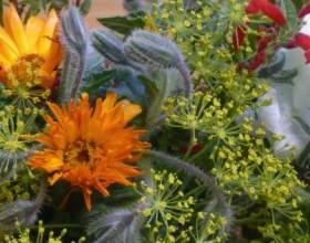 Їстівні квіти фото
