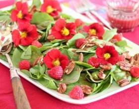 Їстівні квіти: 10 найсмачніших квітів (фото) фото