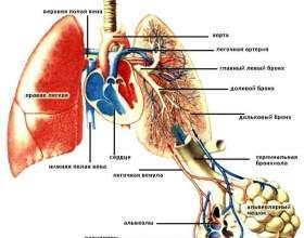 Схема газообміну і здоров`я легенів фото