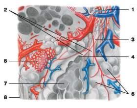 Емфізема легенів фото