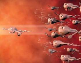 Скільки живе сперматозоїд, і як багато їх виділяється при еякуляції фото