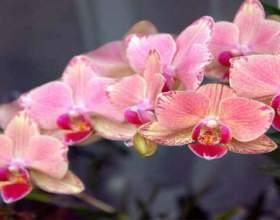 Дотримуйся ці 9 правил і твоя орхідея буде цвісти цілий рік фото