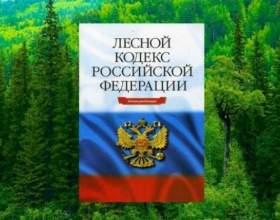 Стаття 75. Договір купівлі-продажу лісових насаджень фото