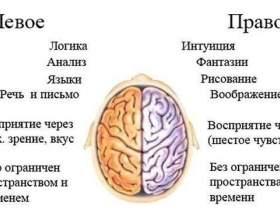 Теорія розділеного мозку фото