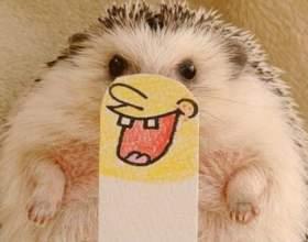 Топ-10 найсмішніших анекдотів! фото