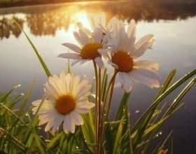 Трави-талісмани для залучення любові, грошей і удачі фото