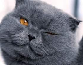 Вчені довели, як кішки маніпулюють нами фото