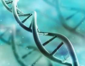 Вчені: сотні генів оживають після смерті фото