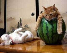 Вчіться у котів, як треба розслаблятися! фото