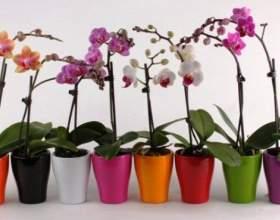 Догляд за орхідеями фото