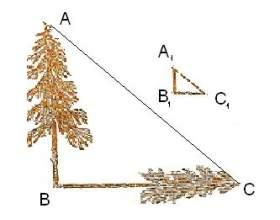Дізнатися висоти дерева по тіні. Застосування геометфото
