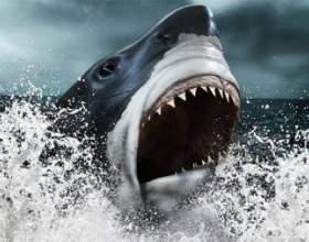 У battlefield 4: naval strike виявлена акула-гігант фото
