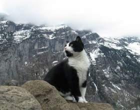 У швейцарських горах заблукав мандрівник. І, як ви думаєте, хто його врятував? фото
