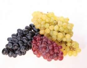 Виноград володіє хорошим жовчогінну дію і застосовуються при хворобах печінки фото