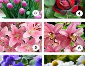 Виберіть квітка і дізнайтеся про себе дещо цікаве. Тест. фото