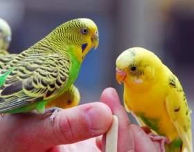 Загадка про птахів фото