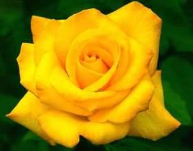 Закон всесвіту - квітка життя. Вчення толтеків фото
