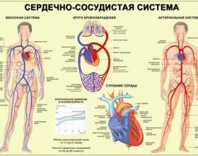 Застійна печінка: причини і наслідки фото
